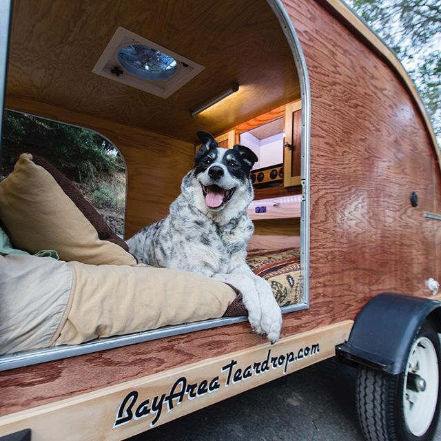 I'm trying to rent (or sell) my teardrop trailer for the weekend. Contact me if you're interested. Thanks! #teardroptrailer #bayareateardrop