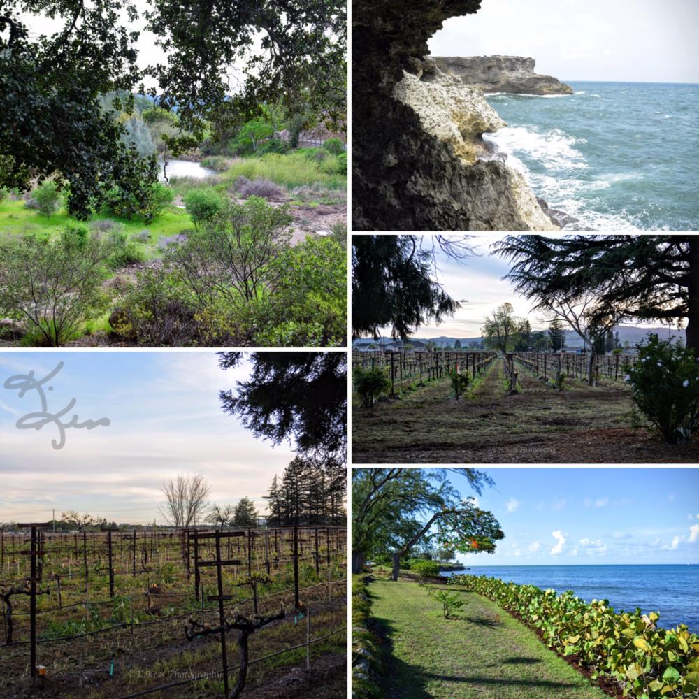 Copy of Landscapes