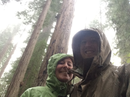 Rain in the Redwoods