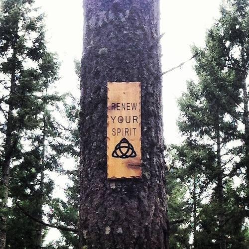 Renew Your Spirit I Nature I tree.jpg