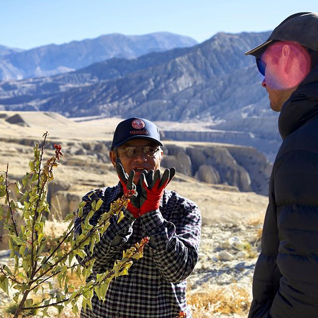 Deep discussions in the heart of the Himalayas about the art of apple tree growing