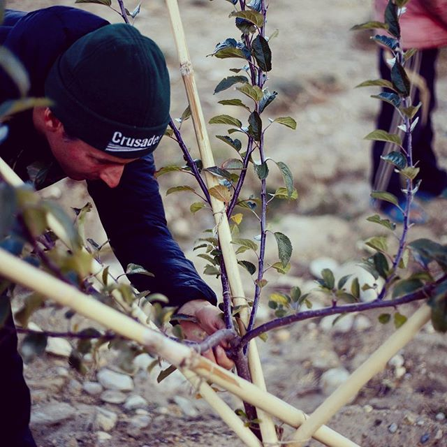 Our agricultural specialist Rob taking extra special care of the extra special apple trees. Trees so special their profits will help provide education to students at the local school in years to come!