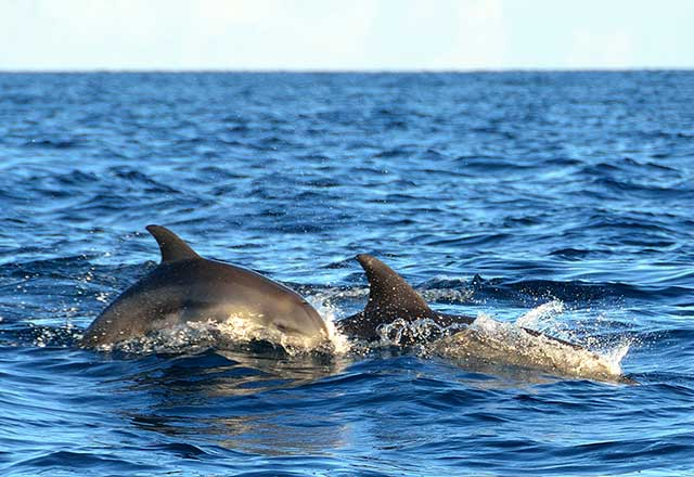 Whale & Dolphin Monitoring