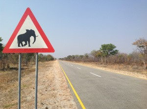 Elephant road sign