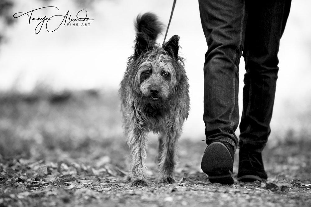 doggie-1-1.jpg