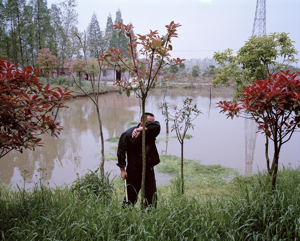 A fish farmer cuts grass to feed carp. Hubei Province, China, 2015.