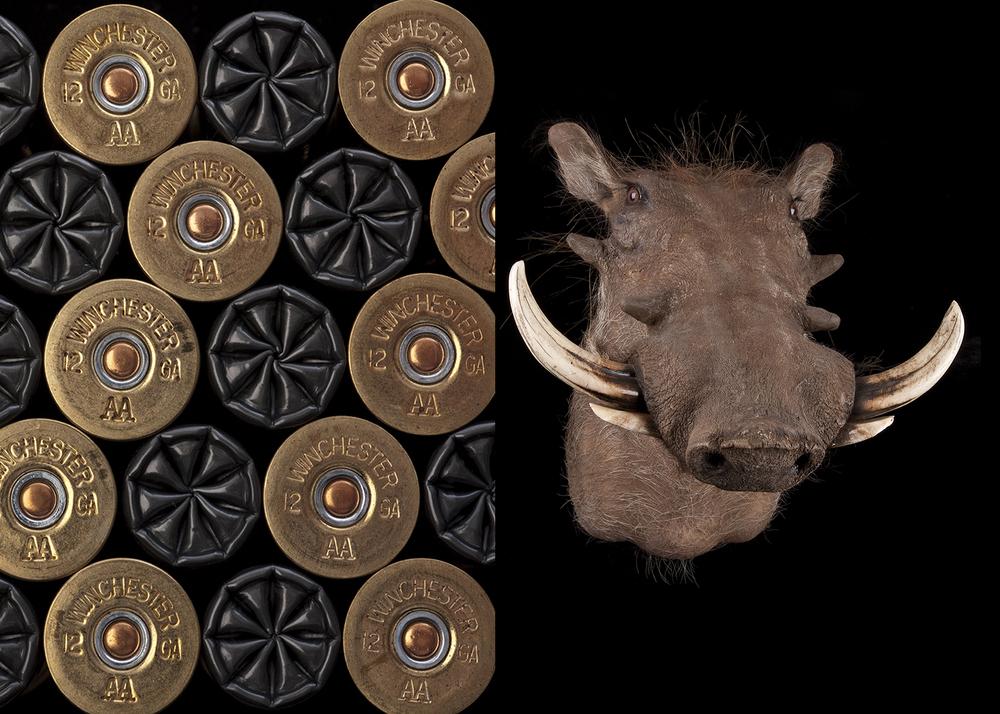 shotgunShells-007303.jpg