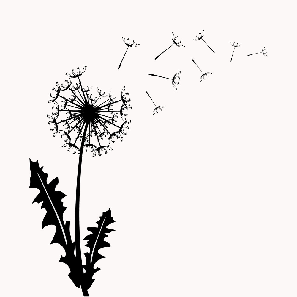 Meet the Green Dandelion-2015-white backround.jpg