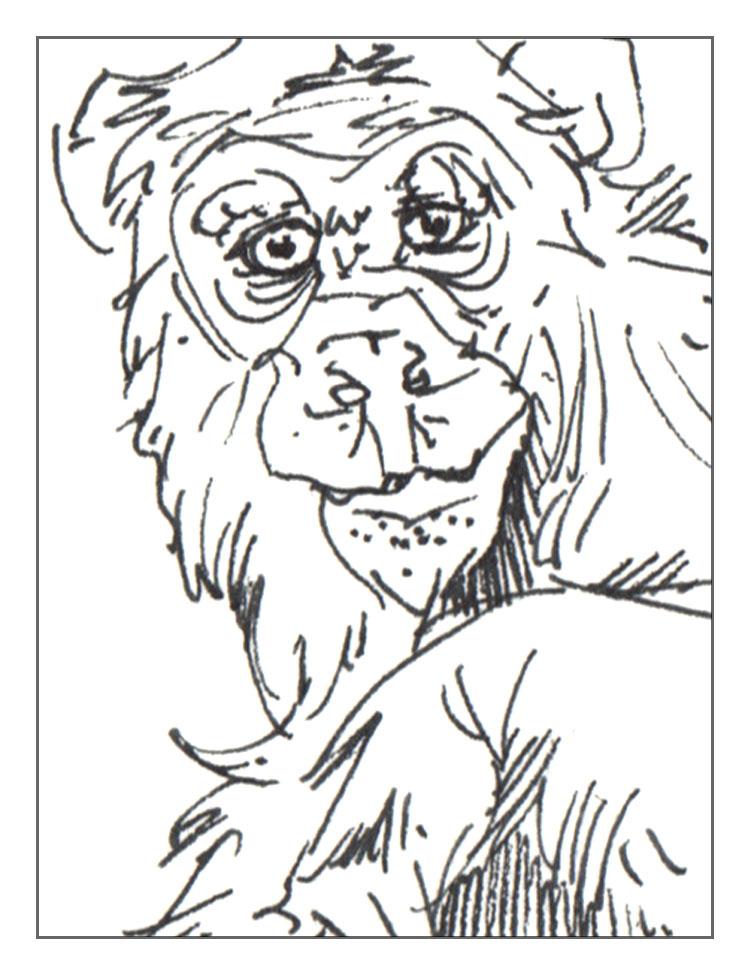 Ape (Martin Jenkins & Vicky White)