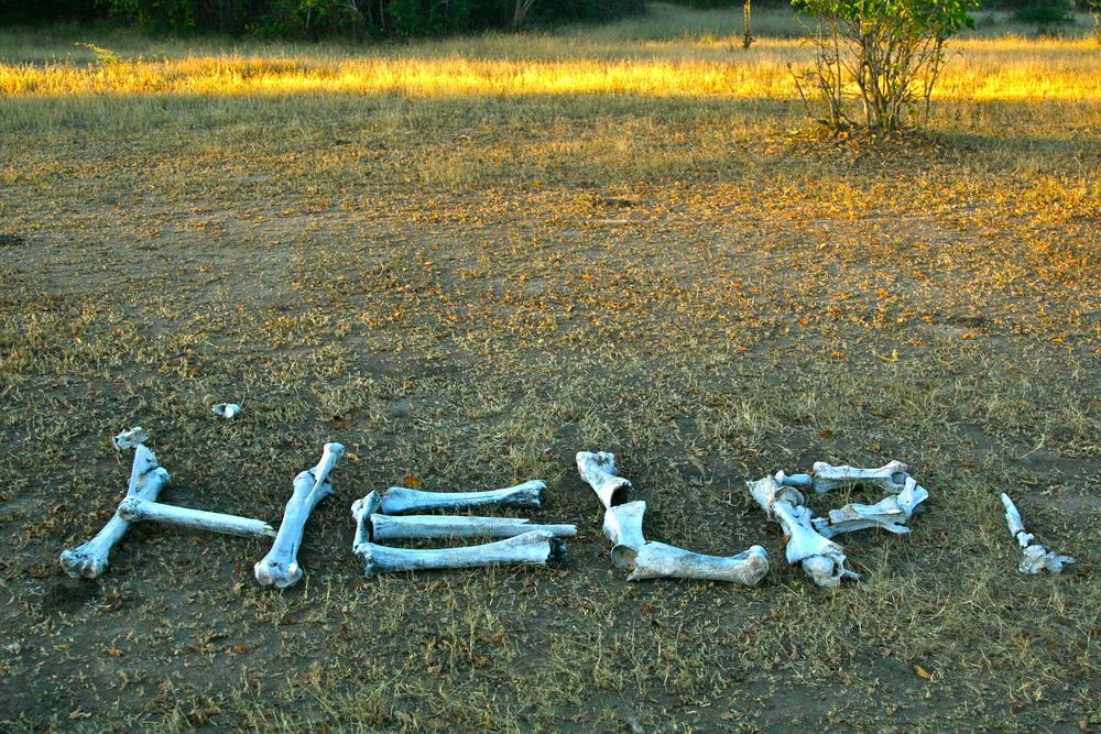 South Luangwa Nat'l Park, Zambia