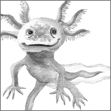 Little Animal Icons_Axolotl.jpg