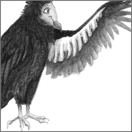 Little Animal Icons_Condor.jpg