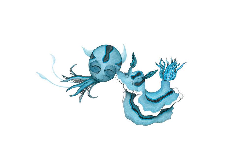 Chromodoris Willani Sea Slug