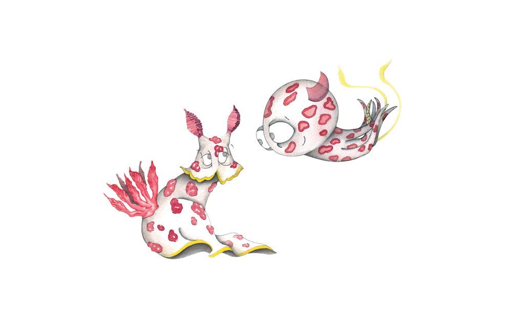 Chromodoris Splendida Sea Slug