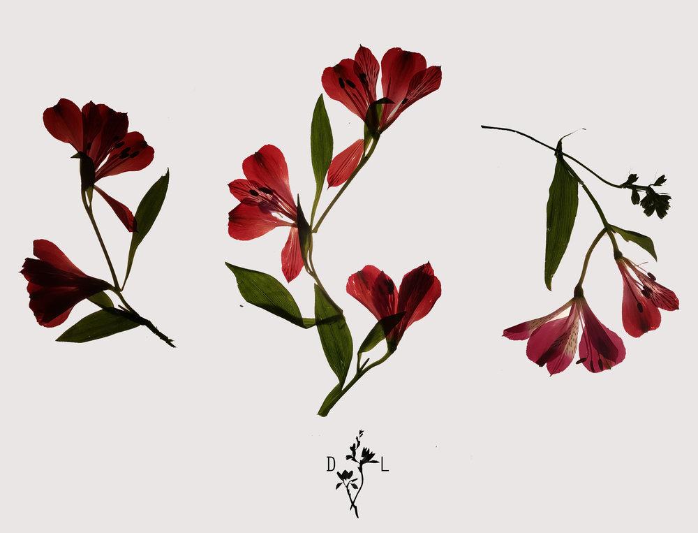flowerflash1.jpg