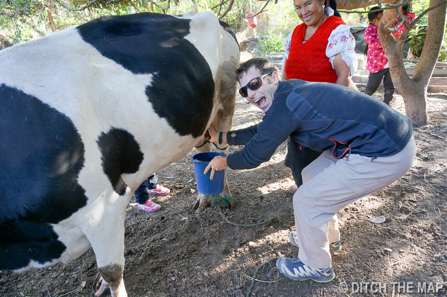 Scott Enjoys Milking the Cow at the Homestay in Ecuador