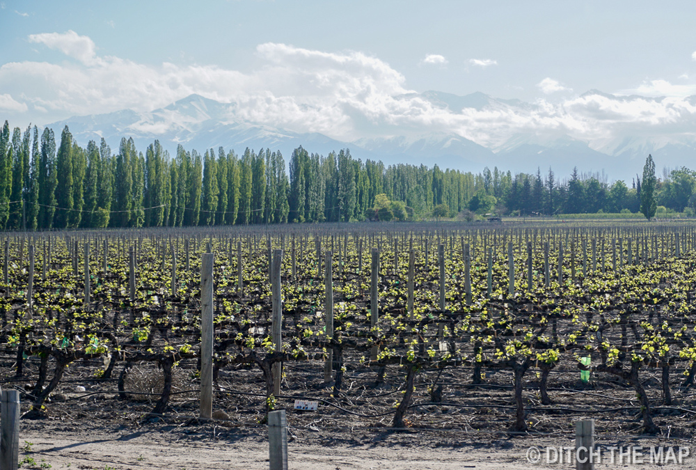 Wineyards in Tupungato, Argentina