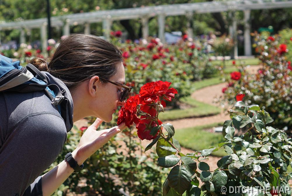 Rose Garden in Buenos Aires, Argentina