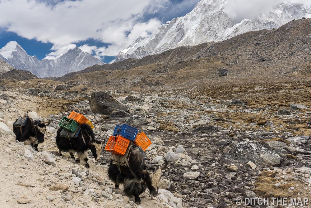 Dingboche to Lobuche, Nepal