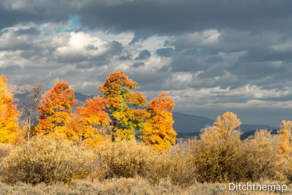 Red, yellow, and orange leaves changing with mountain in backgro