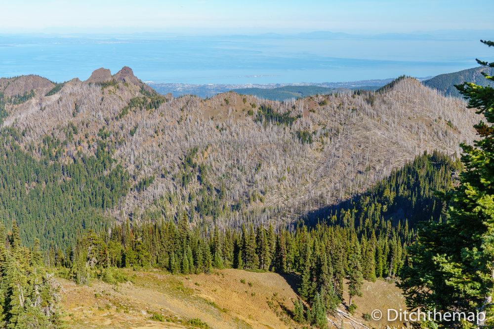 Hurricane Ridge Trail Lookout Point