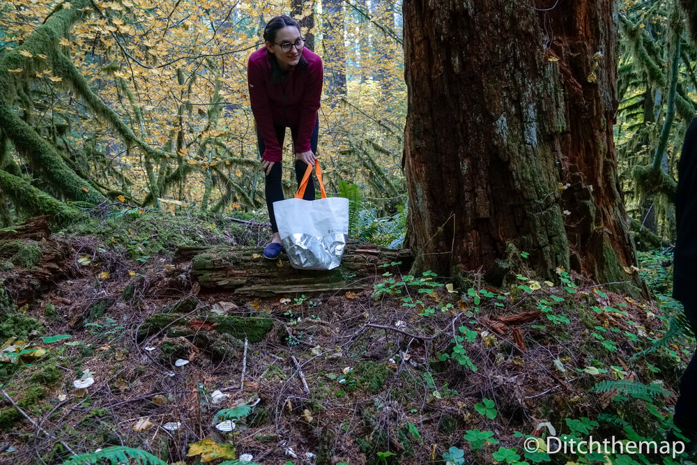 Sylvie forages for lobster mushrooms in Mount Hood, Oregon