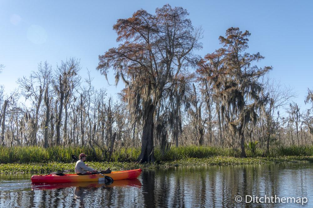 Manchac Mystic Wildlife Kayak Tour
