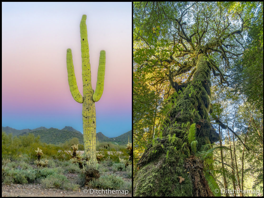 Mountains, Cacti, and Desert in Arizona