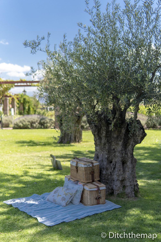 Beautiful day on vineyard