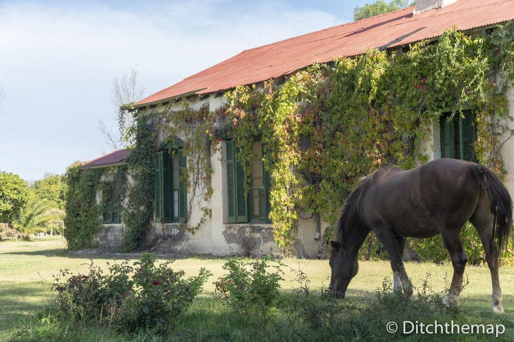 horses graze around the property