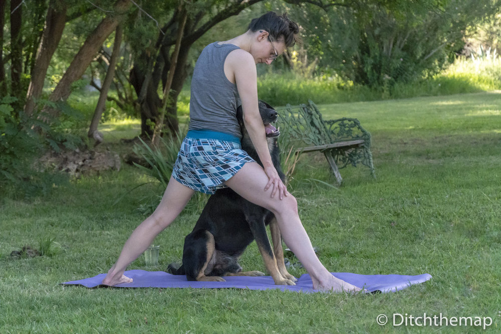 pancho joins sylvie for afternoon yoga