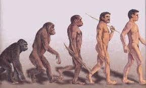 Homo+Erectus.jpg