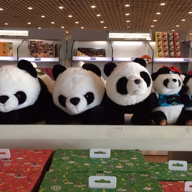 Panda Mania at Beijing Airport. Sorry but options for entertainment are limited! Am I the only one who doesn't find these guys cute? #beijingairport #pandamania