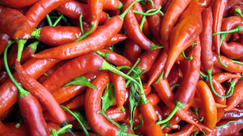 refrigerator pickled hot peppers   ingredients 2 quarts of water 1 cup white vinegar ½ cup pickling salt 2 to 3 pounds of hot peppers 3 cloves garlic   instructions Wash 3 quart jars and the lids - set aside.   Measure the water, vinegar and salt into a 3 quart sauce pan, and stir until salt is dissolved. Bring to a simmer.   Wash and dry the peppers, and cut however you like - smaller slices means more will fit into the jars, but they look nice just cut in half the long way.   Peel the garlic cloves.   Divide the peppers and garlic evenly between the jars, pressing down to fill in spaces.   Carefully pour in the brine, making sure that the peppers are completely covered.   Screw on the lids, and leave at room temperature for 2 or 3 days and then store in the refrigerator. They can be eaten fairly quickly, but are best after sitting a least a month. They will keep for several months in the fridge. View Recipe Source