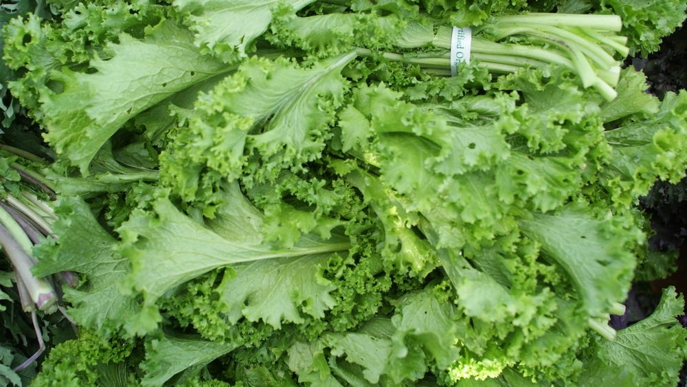 MUSTARD GREENS WITH APPLE CIDER DIJON DRESSING   INGREDIENTS 1/4 cup apple cider vinegar 1/2 cup canola oil 2 tablespoons stone-ground mustard  2 tablespoons fresh lemon juice 2 bunches of mustard greens, stemmed and leaves shredded (16 cups) 2 Granny Smith apples, peeled and sliced 1/2 cup chopped dill Kosher salt Pepper   INSTRUCTIONS In a large bowl, whisk the vinegar with the oil, mustard and lemon juice. Add the mustard greens, apples and dill, season with salt and pepper and toss well. Transfer to a platter and serve. view recipe source