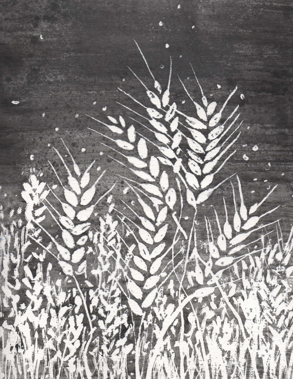 wheat stalk bw.jpg