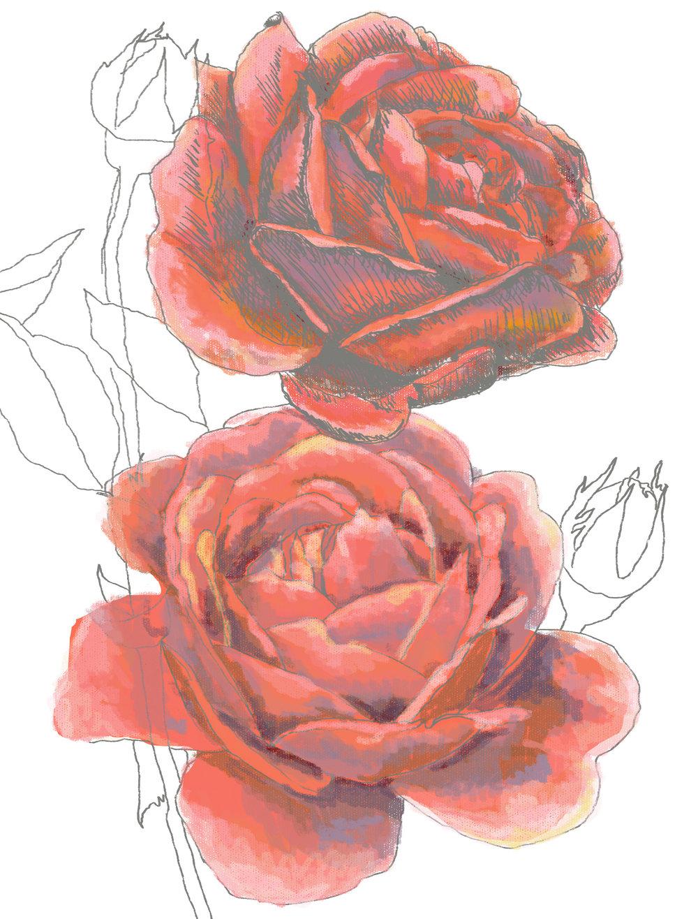coral roses .jpg