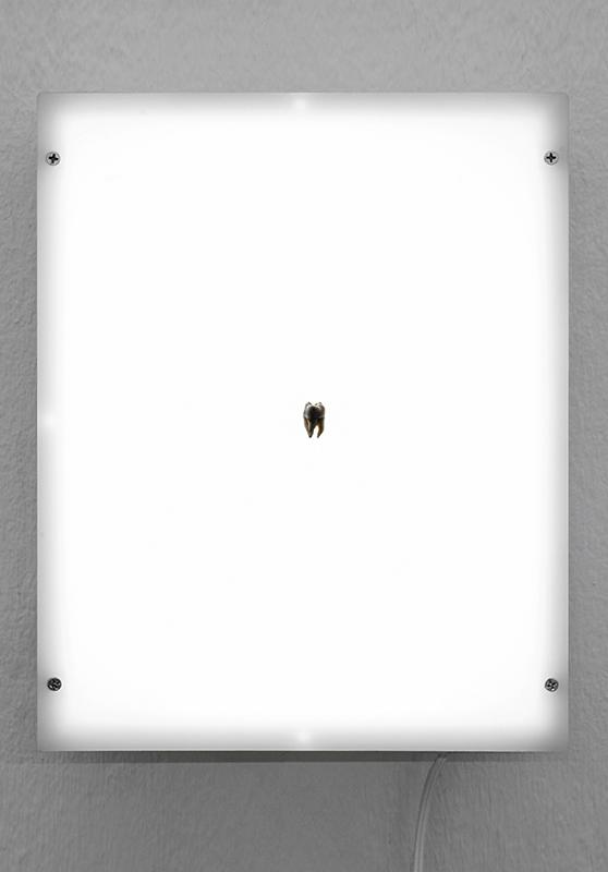 bornean molar indexsmall.jpg