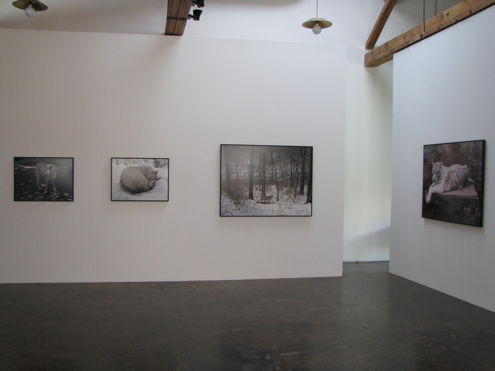 charlotte-dumas-at-Lawrence-Markey-2008-installation-view