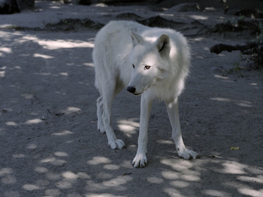 Charlotte Dumas, Untitled (Atka), 2005, C-print, ed. 5, 23 1/2 x 31 1/2 inches, 60 x 80 cm, CDU0501  3/4  Lawrence Markey Inc.