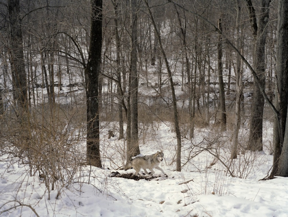 Charlotte Dumas, Untitled (Running), 2005, C-print, ed. 5, 41 1/2 x 54 1/2 inches, CDU0503  4/4  Lawrence Markey Inc.