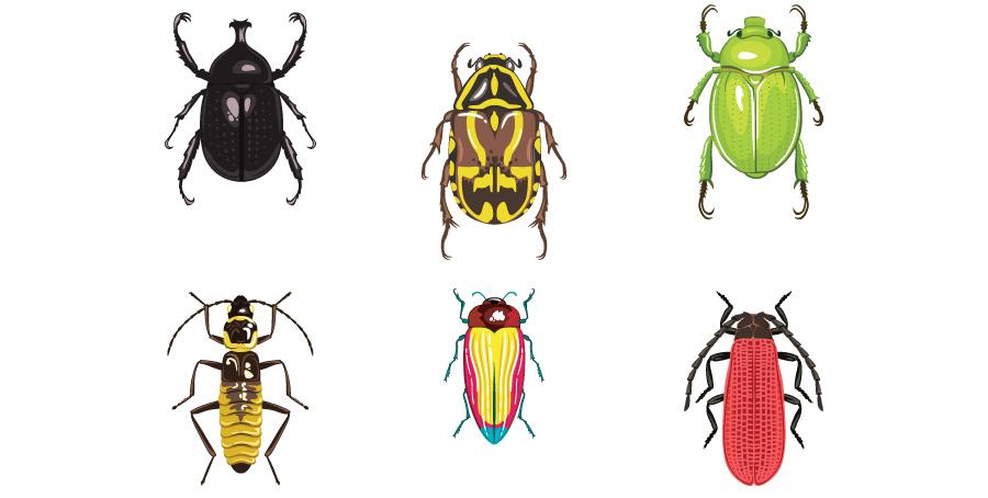 beetles_01.jpg