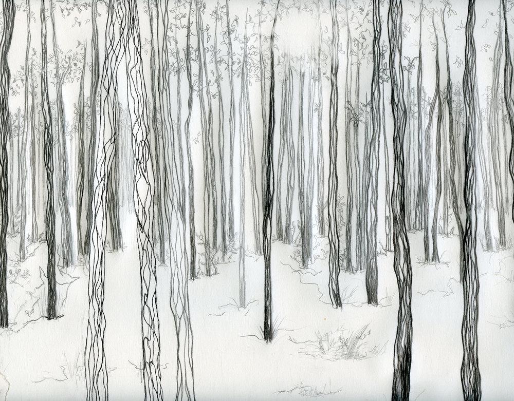 forêt croppé.jpg
