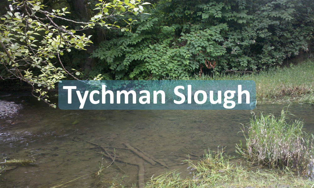Tychman Slough Project Button