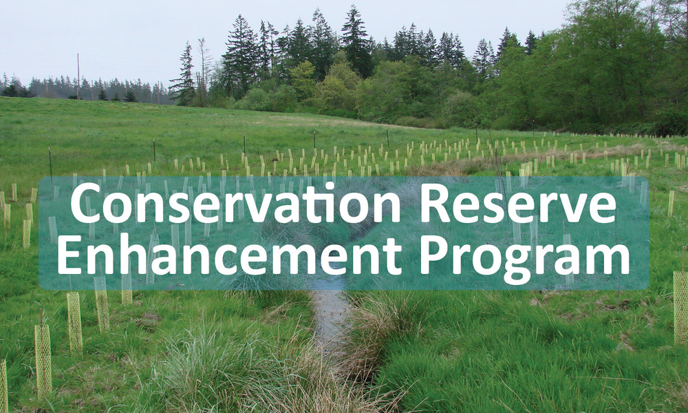 Conservation Reserve Enhancement Program Button