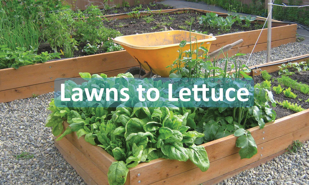 Lawns to Lettuce program button