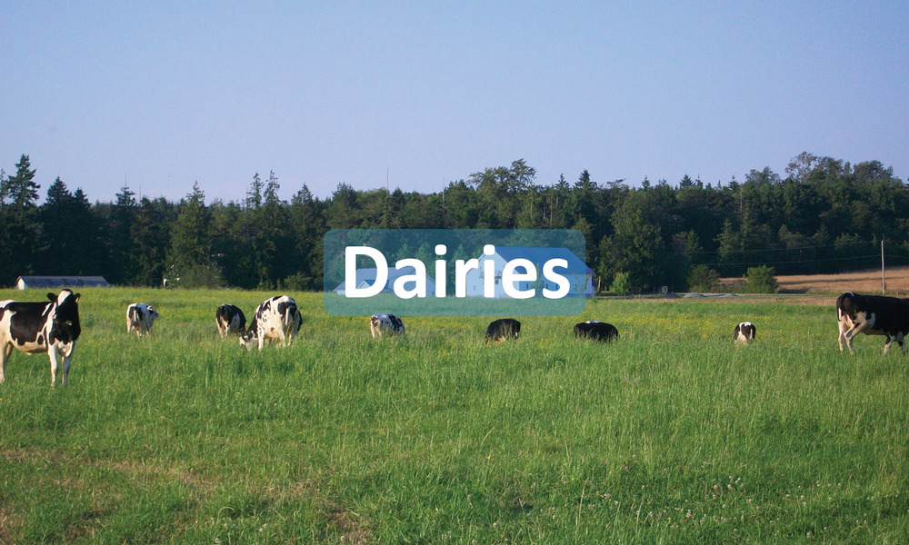 Dairies INformation Button