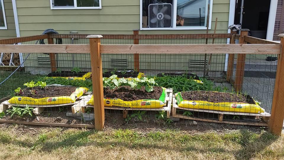 bag gardening1.jpg