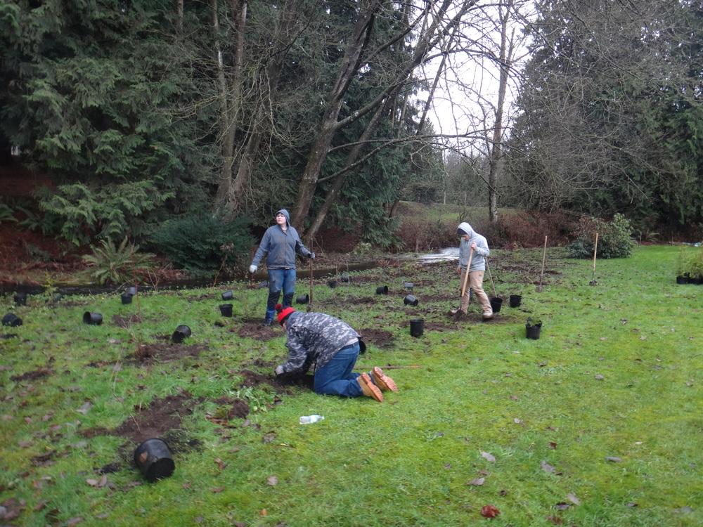 Volunteer planting1.JPG