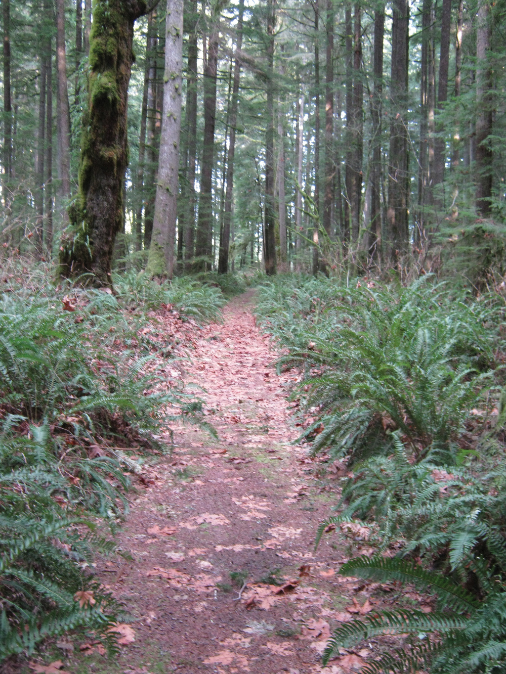 Forests provide timber, wildlife habitat, water retention and recreation opportunities.